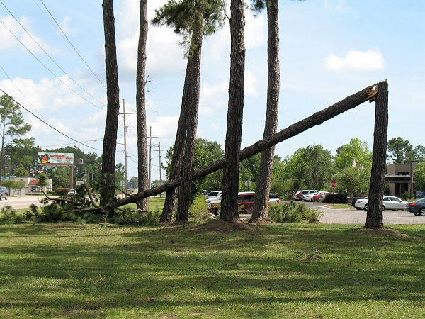 Tree blown down on Nelson Road in Lake Charles