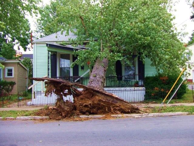 Tree on a house in Louisville