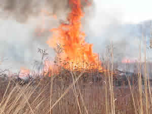 picture of Burn at Indiana Dunes
