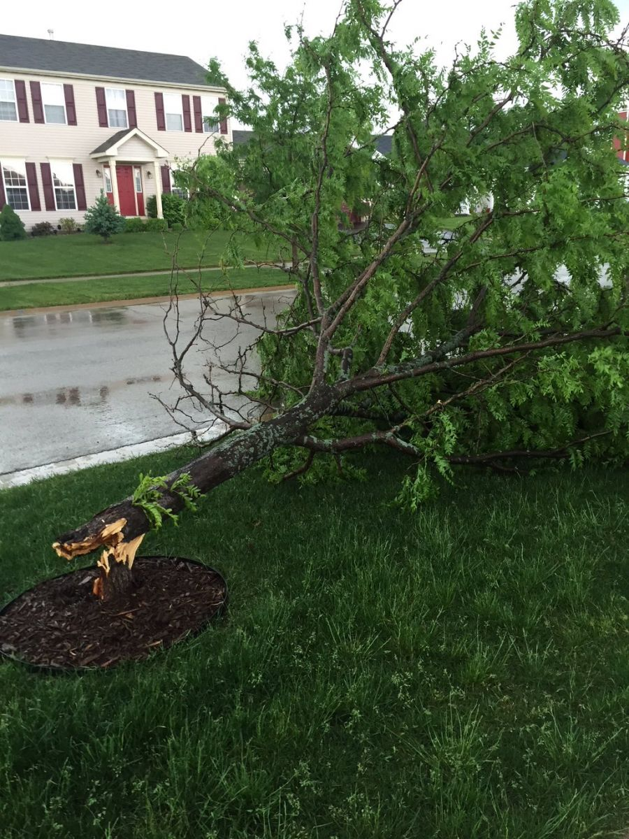 Tree down in Sandwich, IL