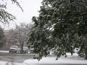 Picture of Snowfall in Lubbock (11/2/2004)