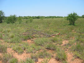 Image of damage from June 12, 2005 storm in Kent County,  northwest of Jayton