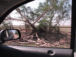 Image of damage around the Muleshoe area from storms on 25 May 2008. Click on the picture for a larger view. Photo by Jody James.