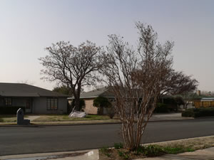 A picture taken from a south Lubbock neighborhood as the wind/dust event on 20 February 2012 was winding down. Click on the image for a larger view.