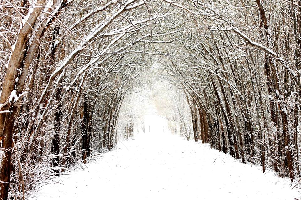 Photograph of snow-covered trees lining a trail at Caprock Canyons Trailways State Park