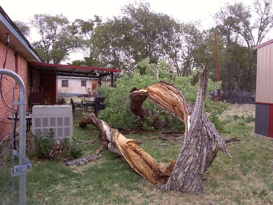 An example of tree damage due to the strong winds in Memphis (May 8th2018).