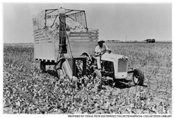 Cotton stripper on the Texas South Plains in the 1950s