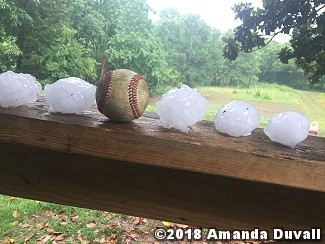 Hail was not as big as a softball (shown), but it was at least baseball size five miles southwest of Hector (Pope County) on 06/02/2018. The photo is courtesy of Amanda Duvall.