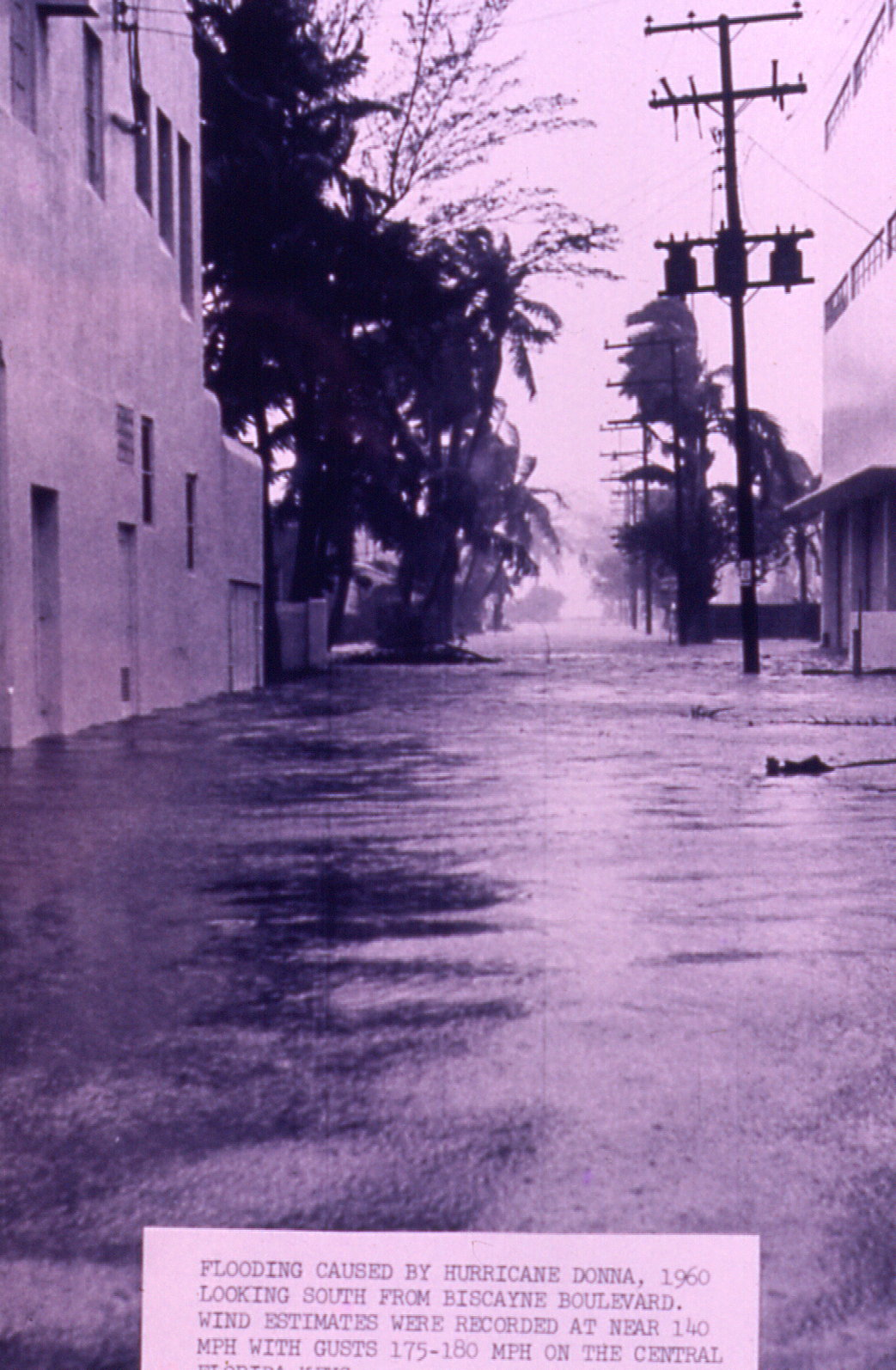 Biscayne Boulevard in Miami during Donna
