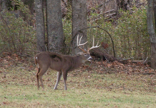 East TN Buck Image