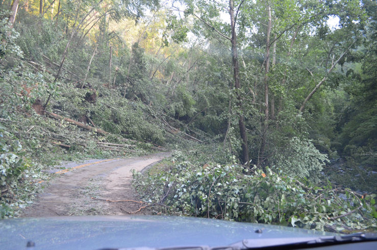 The extensive tree damage observed along Laurel Creek Road in the Great Smoky Mountains National Park on 5 July 2012
