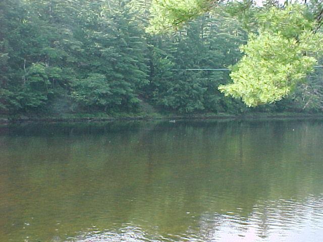 Photograph of the Saco River at Conway, NH (CNWN3) looking upstream