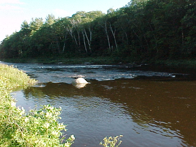 Photograph of the Carrabassett River at North Anson, ME (NANM1) looking downstream