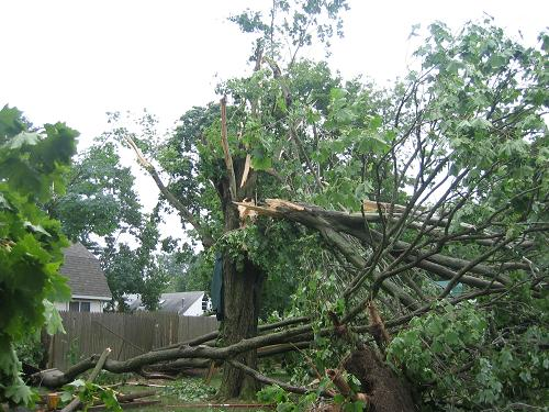 Tree damage from severe thunderstorm winds