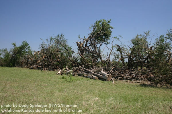 Tree damage at the Oklahoma-Kansas state line north of Braman