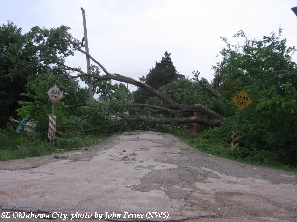 Damage to large trees in southeast Oklahoma City