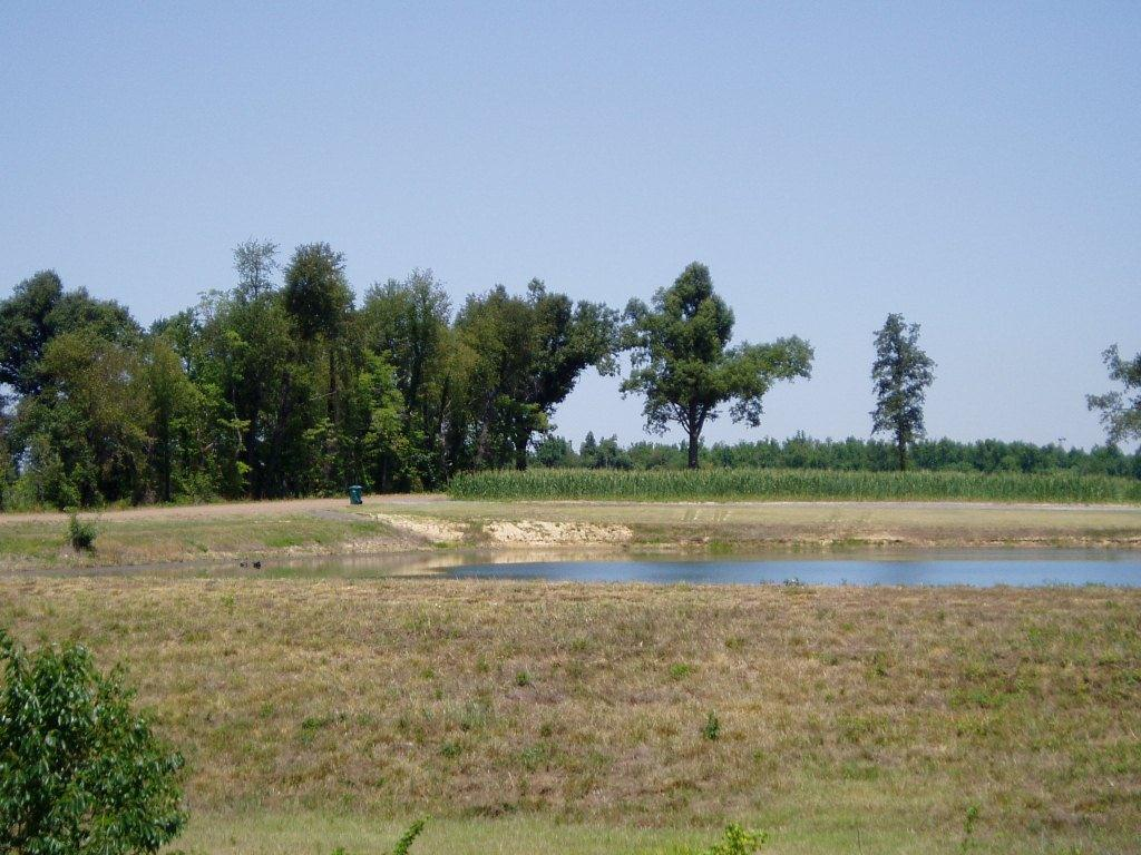 Pond on Highway 62 near Paducah on June 27