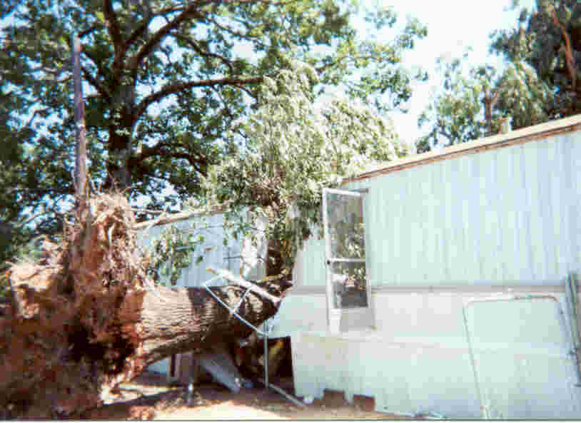 A tree fell on a mobile home in Mansfield, LA