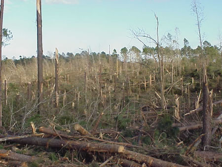 Trees snapped off northeast of Spaulding, LA
