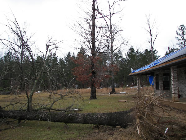 Roof and tree damage from the tornado