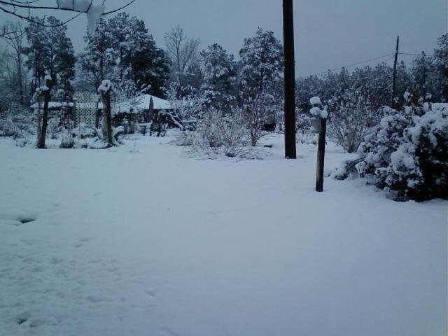 5 to 7 inches of snow in Winnfield, LA