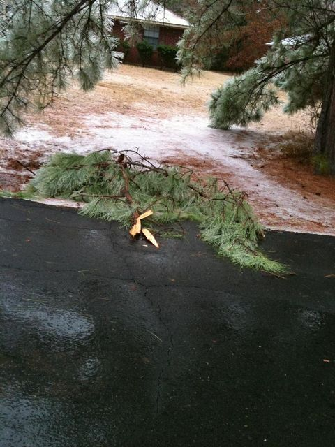 Ice accumulations knocked down trees in Benton, LA