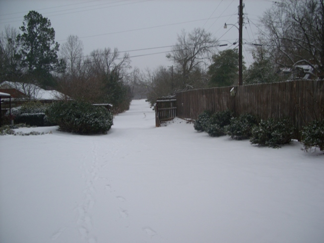 2 to 3 inches of snow fell in Atlanta, TX