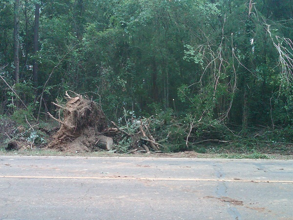 Trees downed across Highway 2