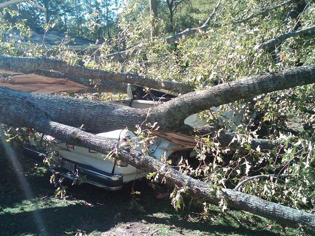 Downed tree crushing a vehicle