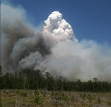 Fires in East Texas in June 2011