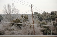 Trees and power lines glazed with ice in De Funiak Springs, FL. Photo courtesy of Keith Wilson.