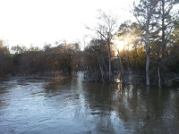 A downstream view of the swollen Ochlockonee River at the CR 154 bridge in Grady County, GA on December 26, 2014.