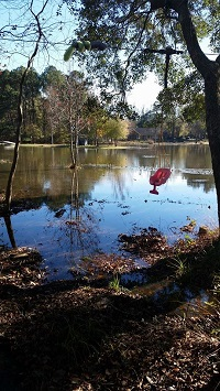 Flooding in the Northshire neighborhood inTallahassee, FL on December 24, 2014. Photo courtesy of Sam Coskey via Facebook.