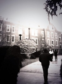 An ice-covered leaf on the FSU campus. Photo submitted to the NWS Twitter page by siduhhknee.
