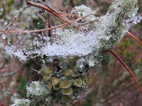 Sleet accumulates in a spider web in Lake Tallavana. Photo courtesy of ABC-27.