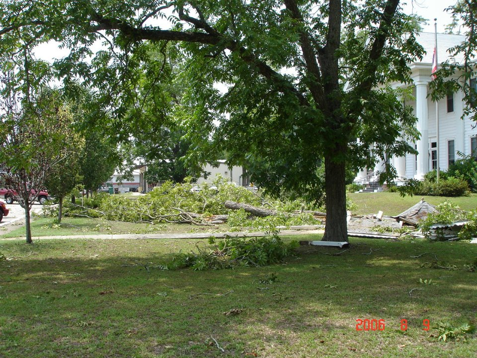 This image depicts large pecan trees damaged in front of the City Hall of Midland City, AL.