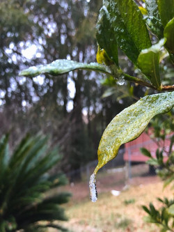 Ice on a leaf in Crestview, FL