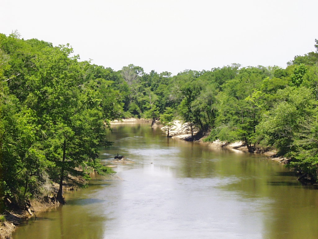 An upstream view of the Pea River in Geneva, Al.  We have a wire weight gauge there that is read by the police department every morning.
