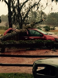 A car crushed by a fallen tree in Thomas County, GA. Photo submitted by Thomas County EM.