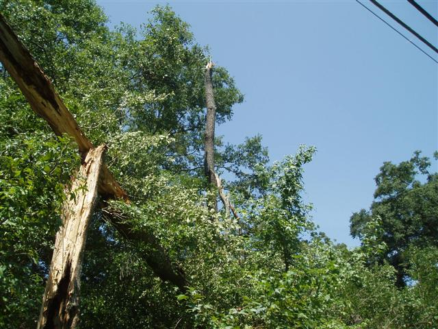 This image shows trees with their tops snapped off due to a downburst wind gust that occurred the evening of Tuesday, August 8, 2006, just east of Thomasville, GA.