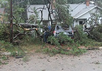 A tree that fell on a car on Ingleside Ave. in Tallahassee, FL. Photo courtesy of the Tallahassee Democrat.