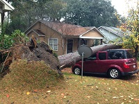 A tree that fell on a car in Tallahassee, FL. Photo courtesy of the Tallahassee Democrat.