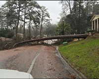 A tree that fell across Woodgate Way in Tallahassee, FL. Photo submitted via Facebook by Melissa Smith Jacoby.