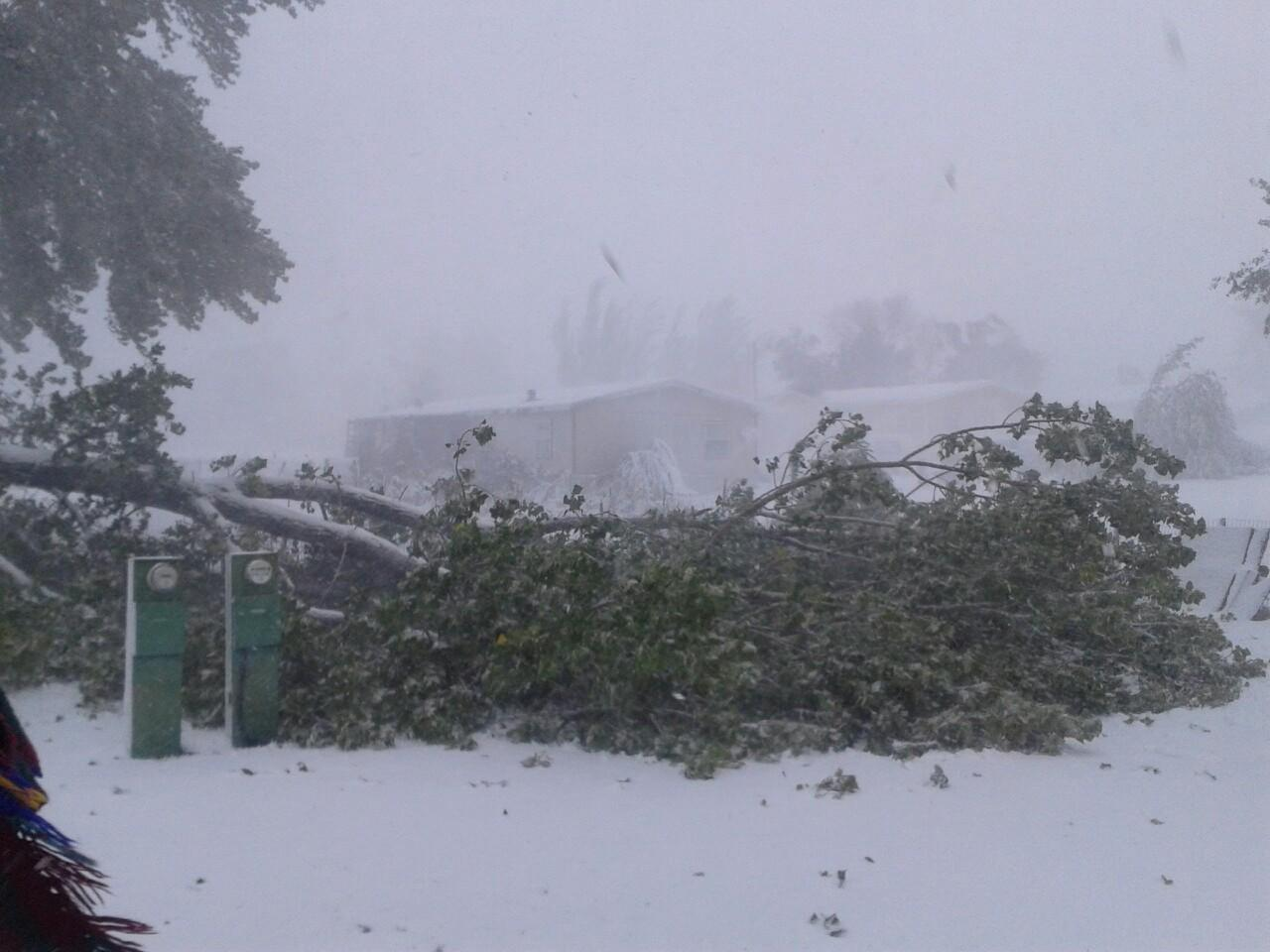 Tree debris at Fitzgerald Field in Rapid City. Photo by Pennington County Emergency Management Office.