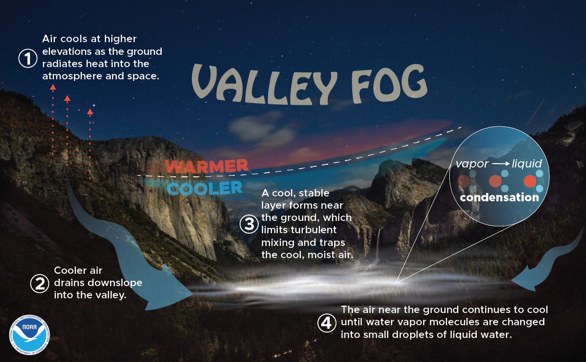 The Science of Vallery Fog: 1. Air cools at higher elevations as the ground radiates heat into the atmosphere and space. 2. Cooler air drains downslope into the valley. 3. A cool, stable layer forms the ground, which limits turbulent mixing and traps the cool, moist air.  4. The air near the ground continues to cool until water vapor moleculesd are changed into small droplets of liquid water.