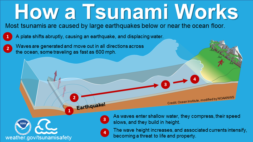 How a tsunami works: Most tsunamis are caused by large earthquakes below or near the ocean floor. 1) A plate shifts abruptly, causing an earthquake, and displacing water. 2) Waves are generated and move out in all directions across the ocean, some traveling as fast as 600 mph. 3) As waves enter shallow water, they compress, their speed slows, and they build in height. 4) The wave height increases, and associated currents intensify, becoming a threat to life and property.